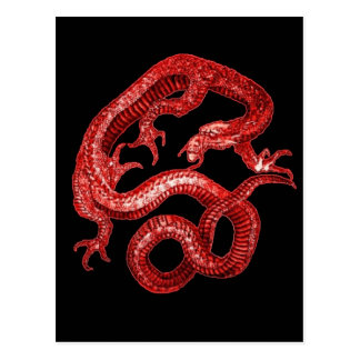 Red & Black Lucky dragon by SHARLES Postcard