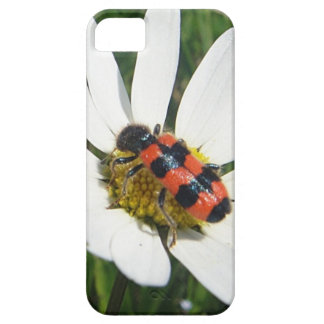 Red-black touched beetle on daisy iPhone SE/5/5s case