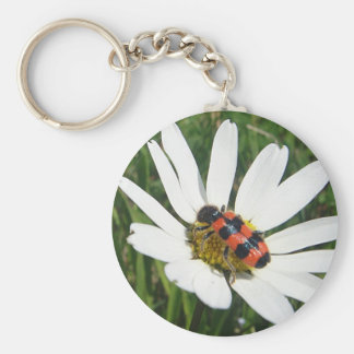 Red-black touched beetle on daisy keychain