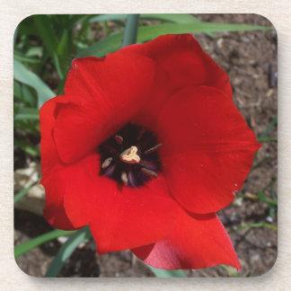Red & Black Tulip plastic Coaster w/cork base