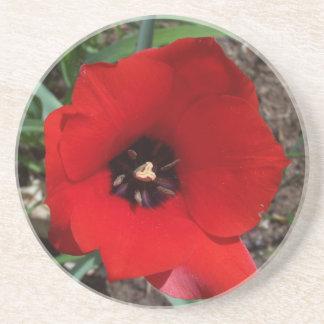 Red & Black Tulip Sandstone Coaster
