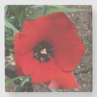 Red & Black Tulip Stone Coaster