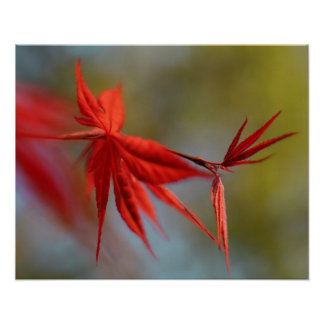 """""""Red Bloom"""", Maple leaf Print"""