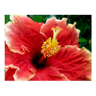 Red Blossom Postcard