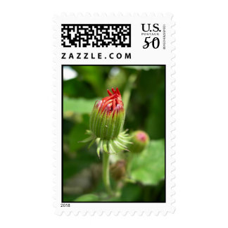 Red Blossoming Flower Postage