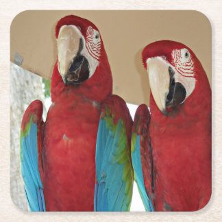 Red Blue Green Macaws (Parrots) Square Paper Coaster