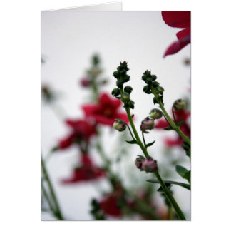 Red blur - Diascia 1- Floral Photography Card