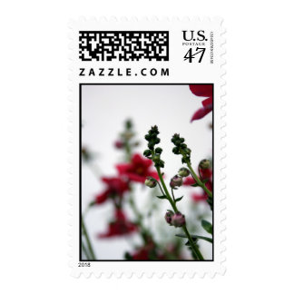 Red blur Diascia - Floral Photography Stamp