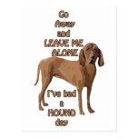 red bone coon hound post card