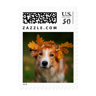 Red Border Collie With a Garland of Autumn Leaves Postage