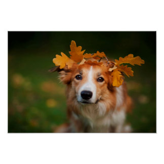 Red Border Collie With a Garland of Autumn Leaves Poster