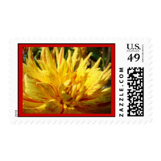 Red Border stamps Red Yellow Dahlia Flower