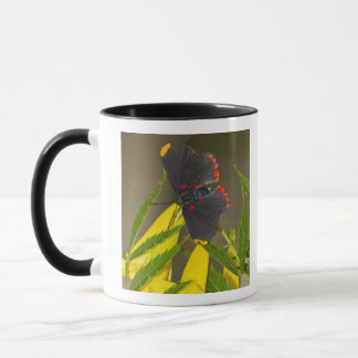 Red-bordered Pixie on esperanza brush Mug