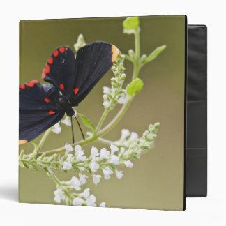 Red-bordered Pixie on white brush Vinyl Binders