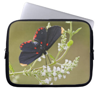 Red-bordered Pixie on white brush Computer Sleeve