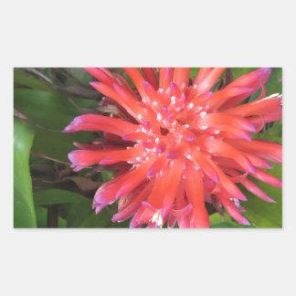Red Bormeliade Top View Rectangular Sticker