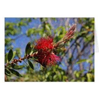 Red Bottlebrush Flower Blank Note Card