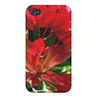 Red Bougainvillea iPhone 4/4S Cover