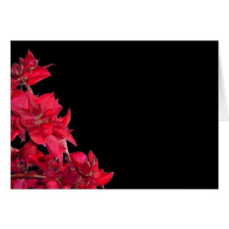 Red Bougainvillea on Black Greeting Cards