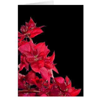 Red Bougainvillea on Black Card