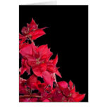 Red Bougainvillea on Black Greeting Card