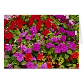 Red Bouquet of begonias flowers Greeting Card