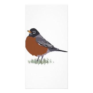 Red Breasted American Robin Digitally Drawn Bird Card
