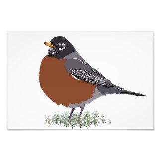 Red Breasted American Robin Digitally Drawn Bird Photo Print