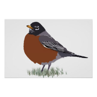 Red Breasted American Robin Digitally Drawn Bird Poster