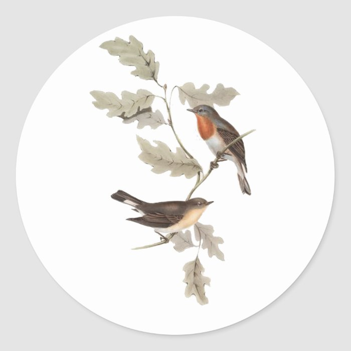 Red-breasted Flycatcher Classic Round Sticker