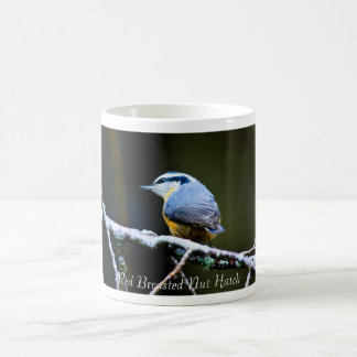Red Breasted Nut Hatch Coffee Cup