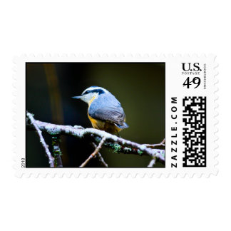 Red Breasted Nut Hatch Postage Stamp