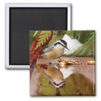 Red-breasted Nuthatch 2 Inch Square Magnet