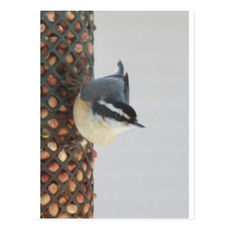 Red-breasted Nuthatch at feeder Postcard