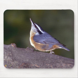 Red-breasted Nuthatch on branch Mouse Pads