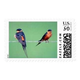 Red-Breasted Swallows (Hirundo Semirufa) Postage