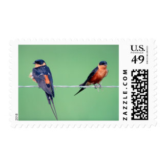 Red-Breasted Swallows (Hirundo Semirufa) Stamp