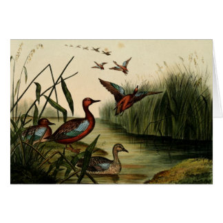 Red Breasted Teal Duck Stationery Note Card
