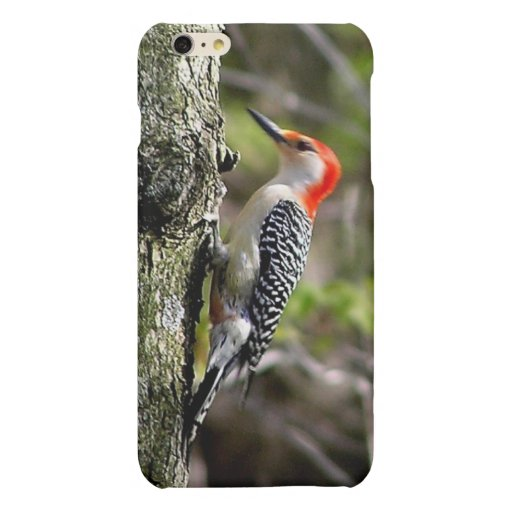 Red Breasted Woodpecker Matte iPhone 6 Plus Case