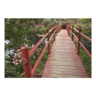 Red bridge over pond, Magnolia Plantation, Photo Print