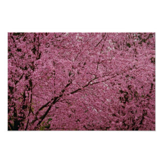 Red Bright spring blossoms on flowering plum trees Poster
