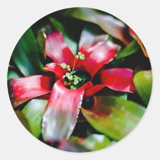 Red Bromeliad Classic Round Sticker