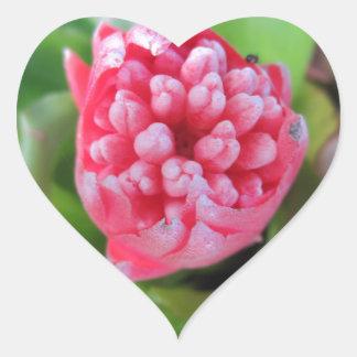 Red Bromeliade 03 Heart Sticker