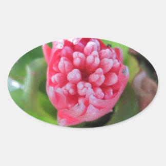 Red Bromeliade 03 Oval Sticker