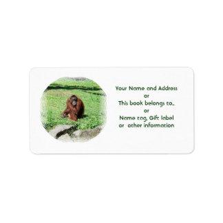 Red-Brown Haired Orangutan Sitting On Grass Label