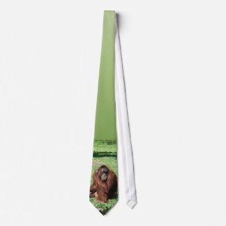Red-Brown Haired Orangutan Sitting On Grass Neck Tie