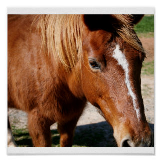 Red Brown Horse Closuep Poster