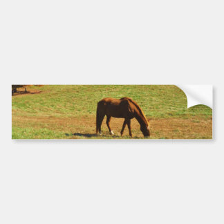 Red Brown horse in the  autumn trees Bumper Sticker