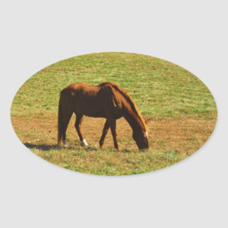 Red Brown horse in the  autumn trees Oval Sticker