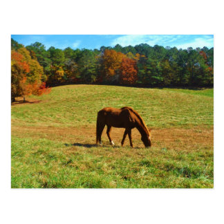 Red Brown horse in the autumn trees Post Card